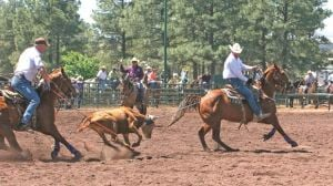 World Series team ropers qualify in Show Low