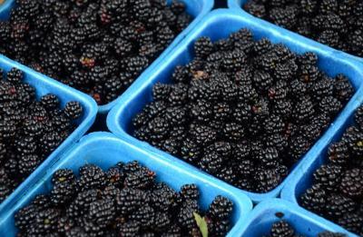 Tennessee blackberries