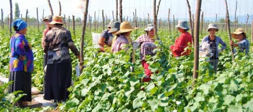 Women farmers in country of Georgia