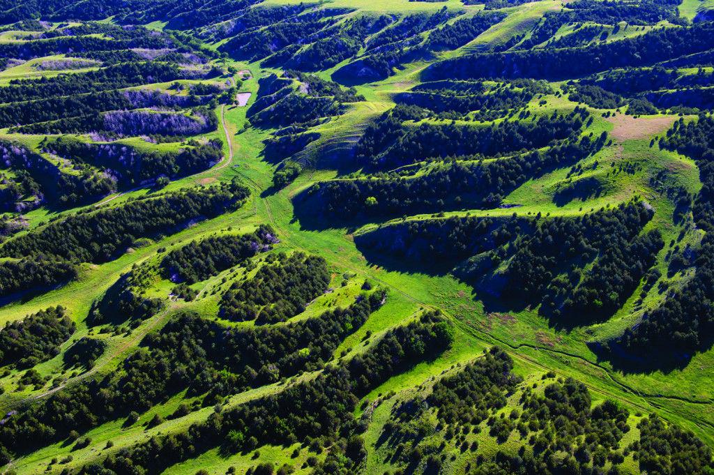 Eastern red cedar aerial