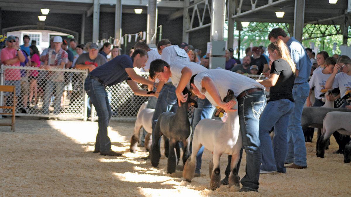 A sheep show draws a crowd.