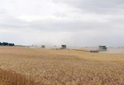 Wheat harvest slow to start, but crops looking good