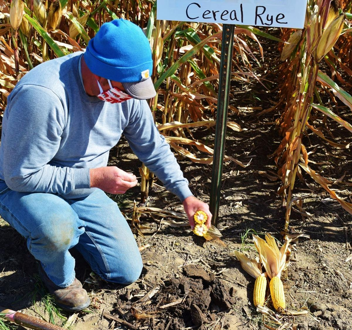 Josh Kamps displaying corn in plot trial with cereal rye