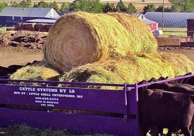 New LS livestock feeder looks promising for less hay waste