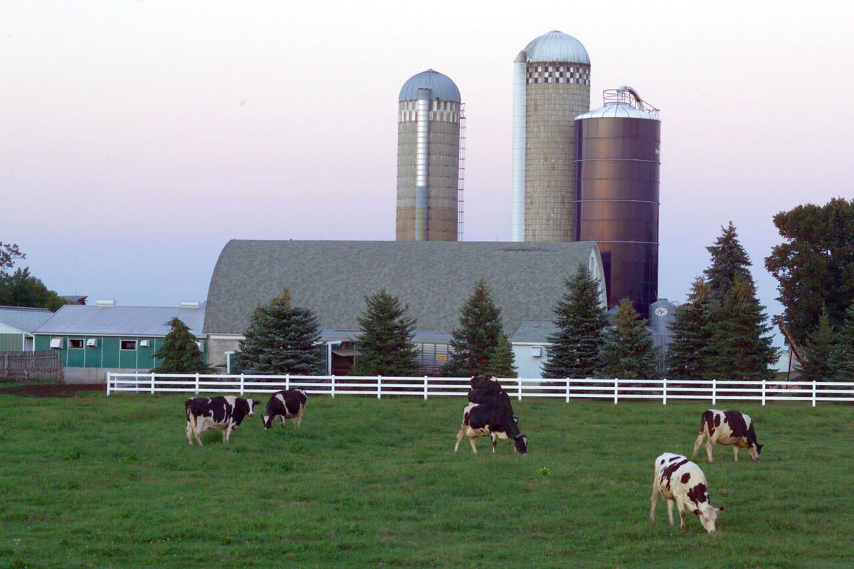 Animal Science -- Dairy