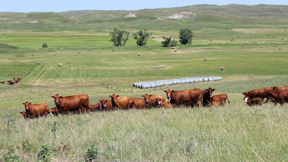 Rangeland Livestock Center