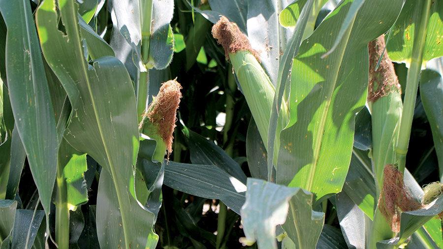 July corn in Missouri