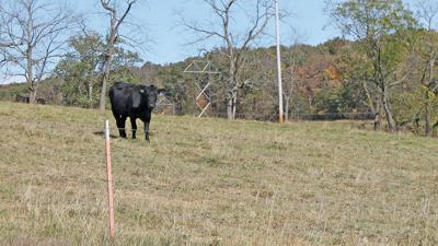MO pasture and forage