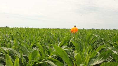 Farmer alone in corn