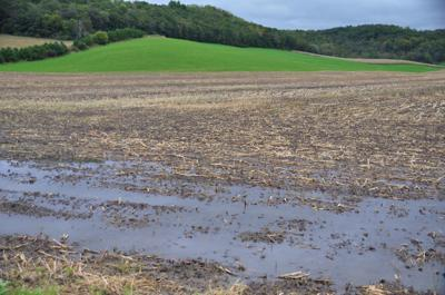Fields full of water