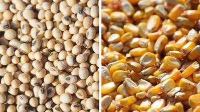 Corn Soybean split screen