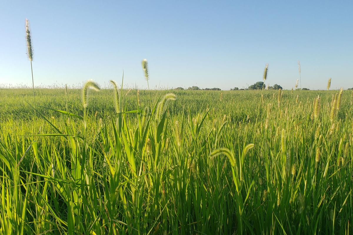 Pasture weed management