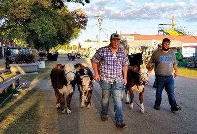 Clay County Fair Cows