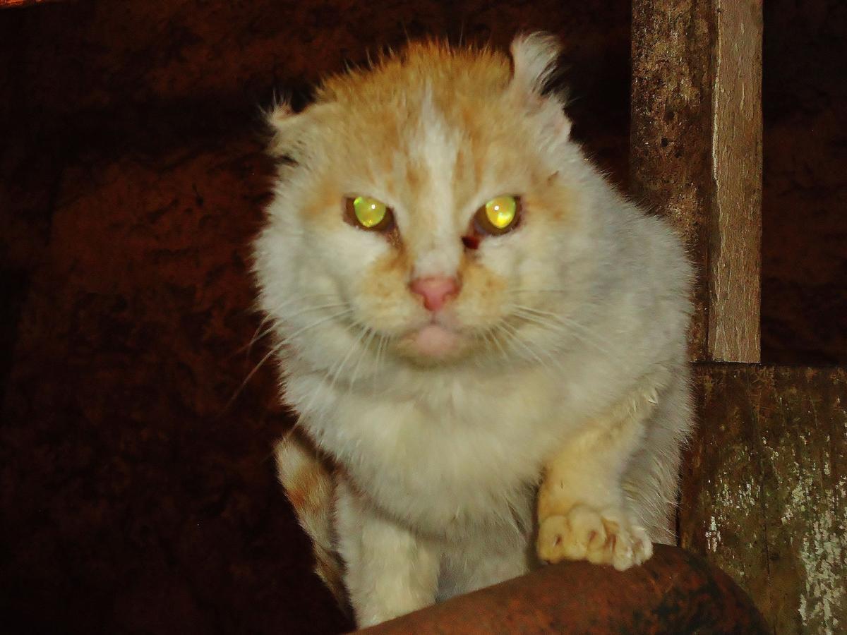 Farm Cat Corner