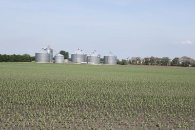 File photo, bins, corn