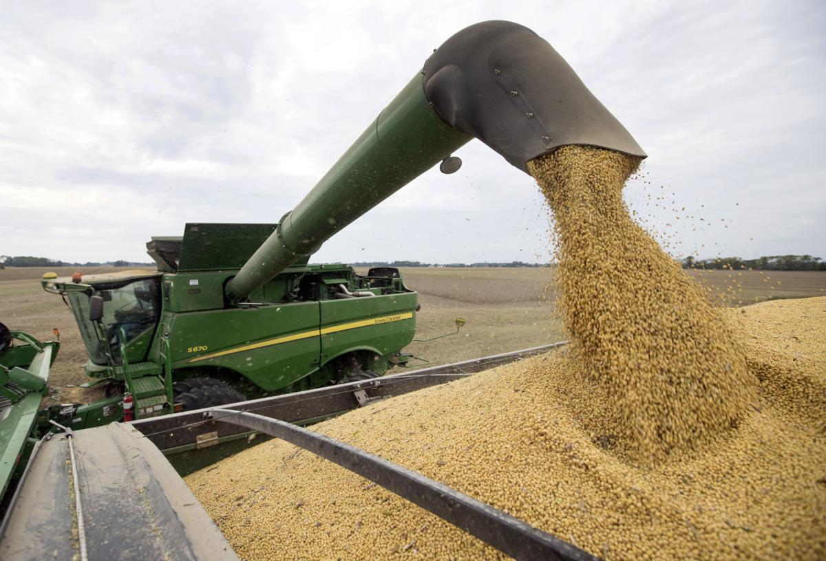 Soybeans fill wagon
