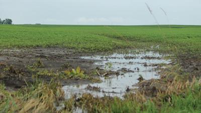 Water standing in field
