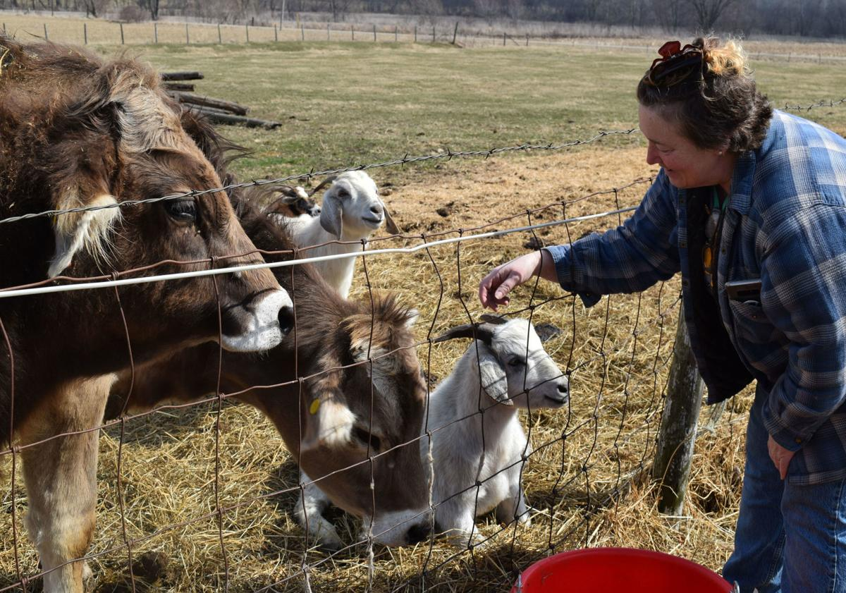Betty Anderson with steer and goats