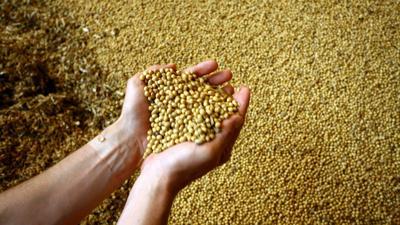 Hands holding beans USGC