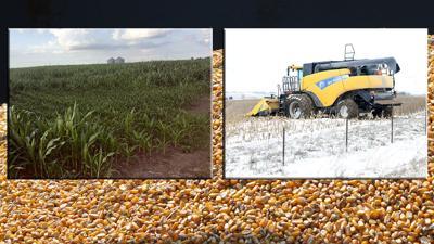 Wet spring snow harvest on corn background