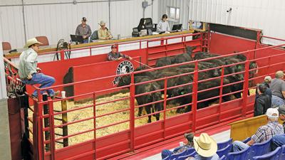 Sale barn updates tech but still relies on service