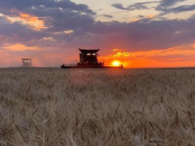 Hoffman Harvesting