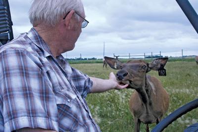 Kuper with Elk