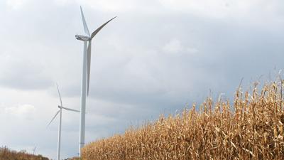 Wind turbine near mature corn