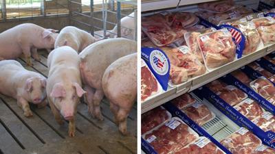 Pigs with retail pork