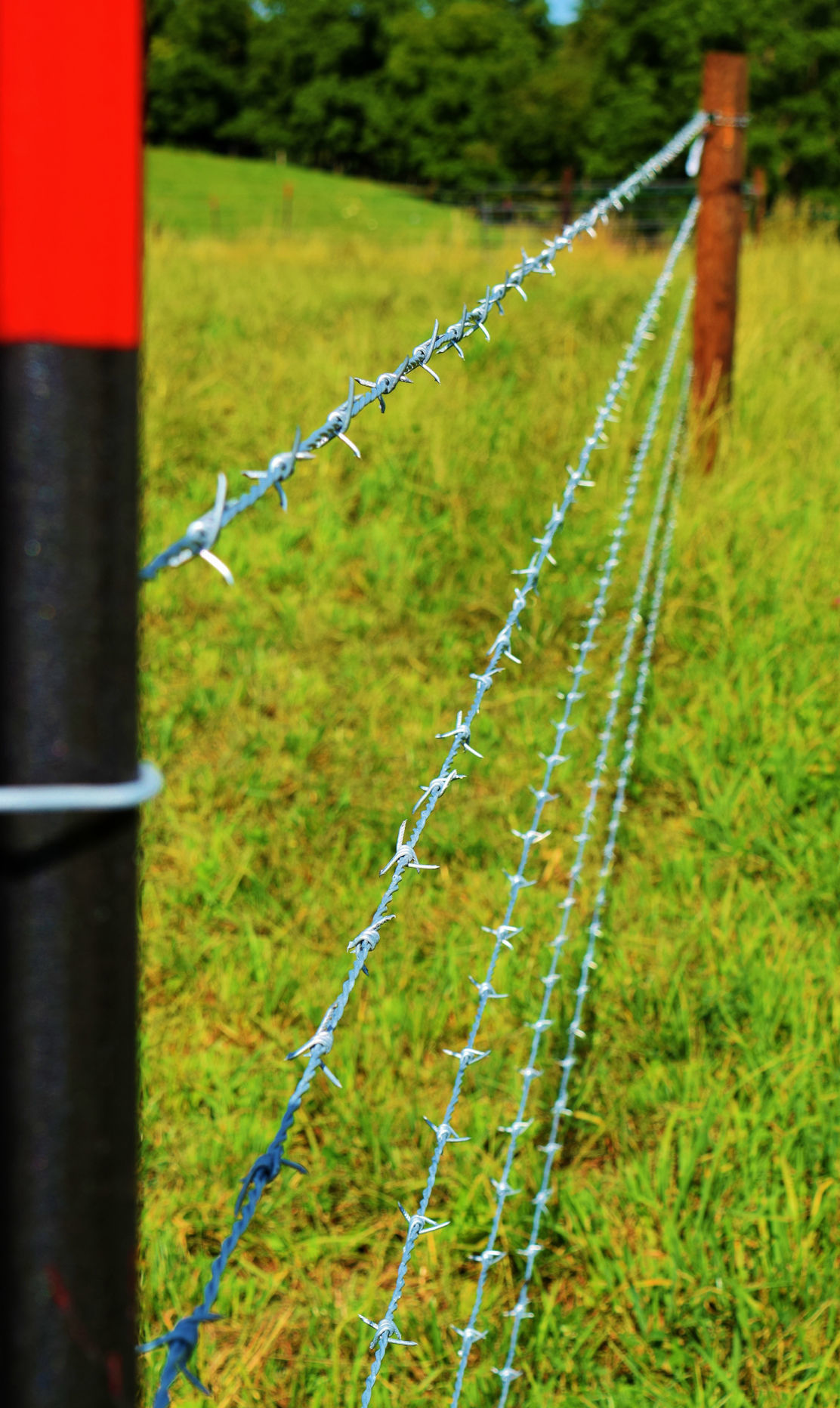 Five-strand barbed-wire fencing and posts