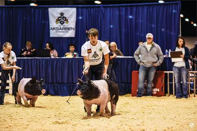 From Great to Grand, Aksarben Stock Show underway
