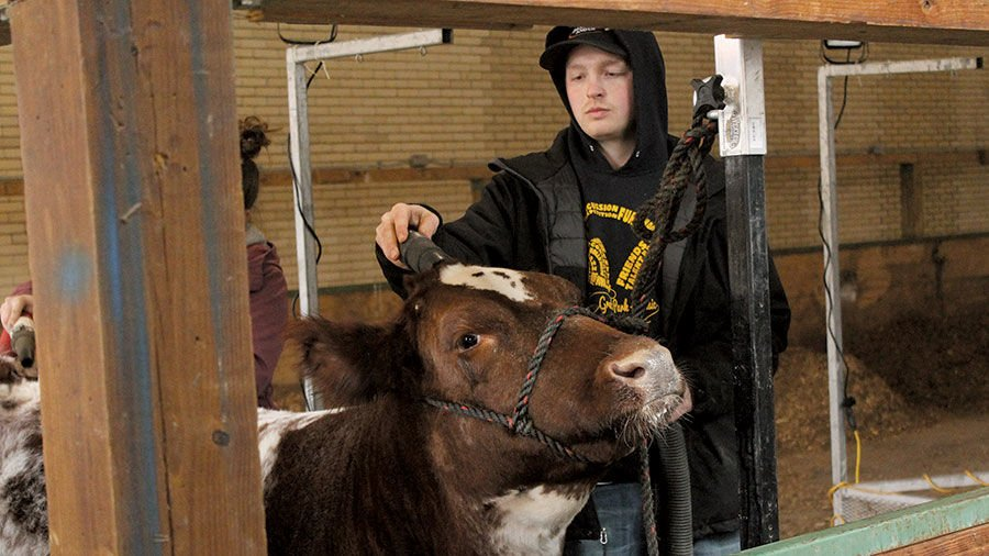 Getting animals ready