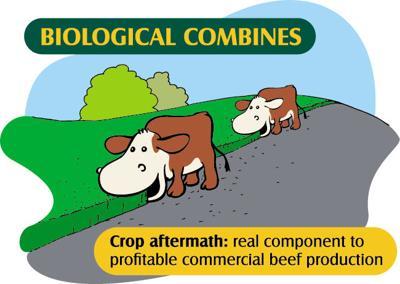 BeefTalk Cow Combine