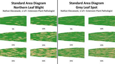 corn  foliar disease diagrams