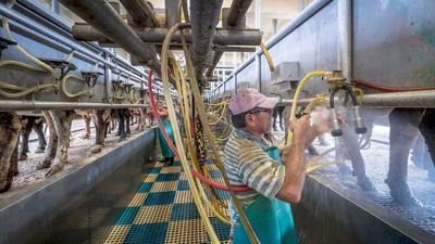 USDA farm laborer dairy image
