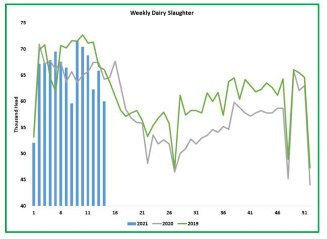 Weekly Dairy Slaughter