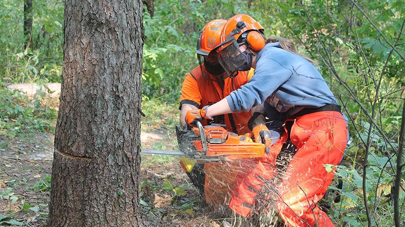 Chainsaw cuts tree