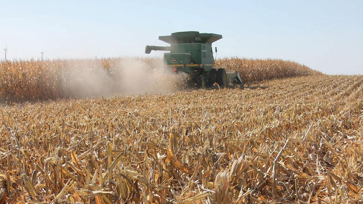 Jerry Lyon harvests