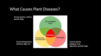 Plant disease three factors (copy)