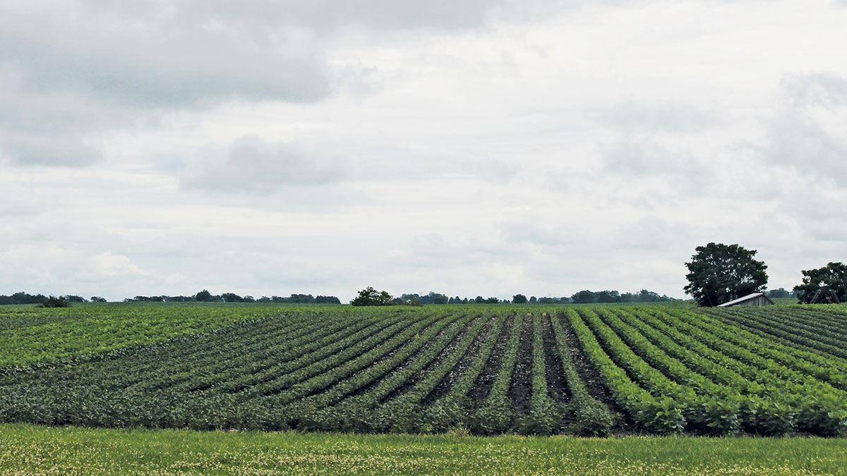 Central Illinois crop update
