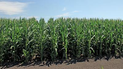 Illinois corn August