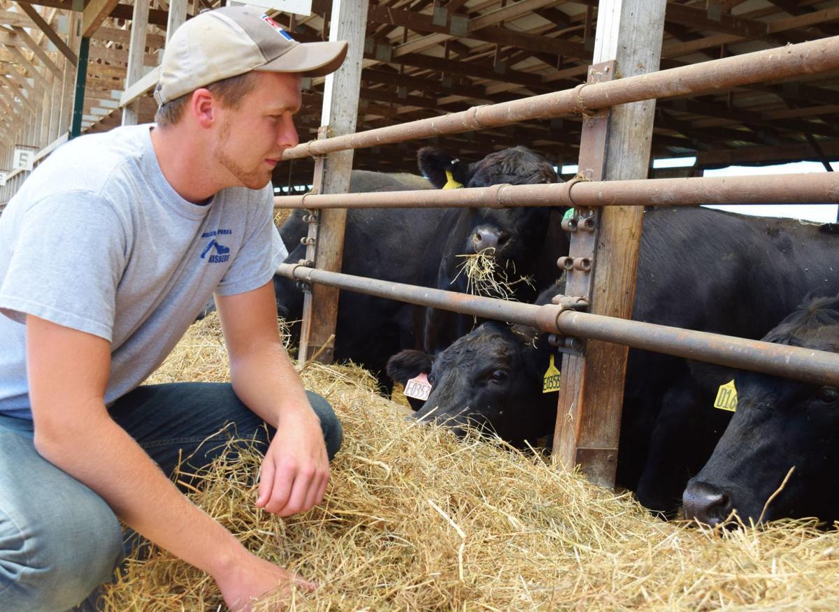 Aaron Rathke with Angus cows feeding