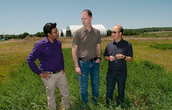 K-State researchers land $500K grant to study alfalfa