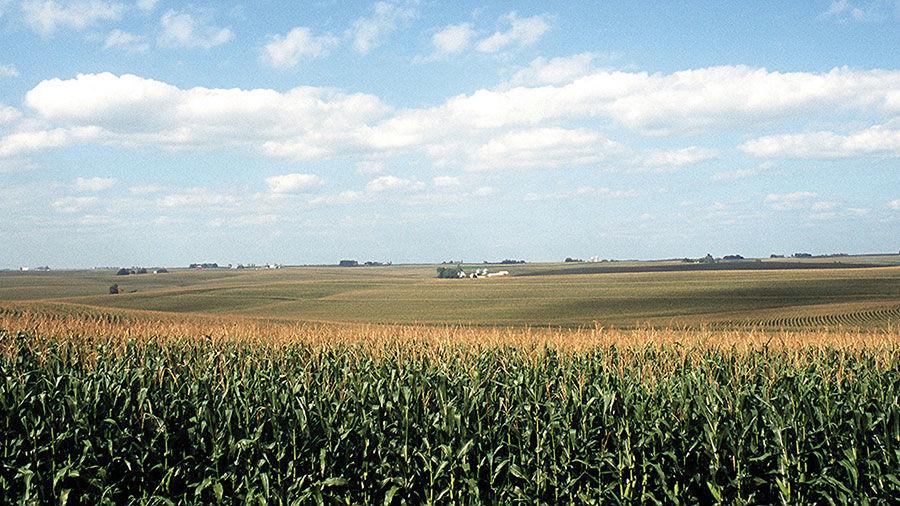 Farm scene with cornfields