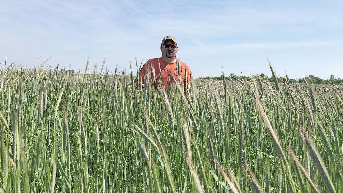 Cereal rye grows on Kris Reynolds' farm