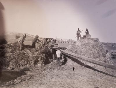 OLD PHOTO - Threshing Wheat