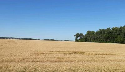 North Dakota wheat