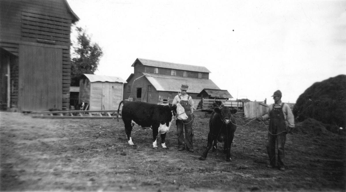 Double S Farms cattle