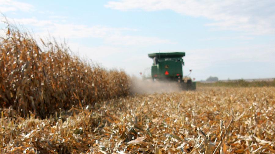 Corn Harvest w blue sky