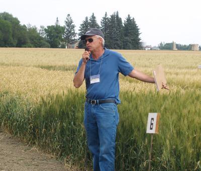 Luther Talbert, MSU spring wheat breeder